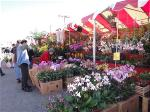 flowers-market-little-saigon-2012-63-large